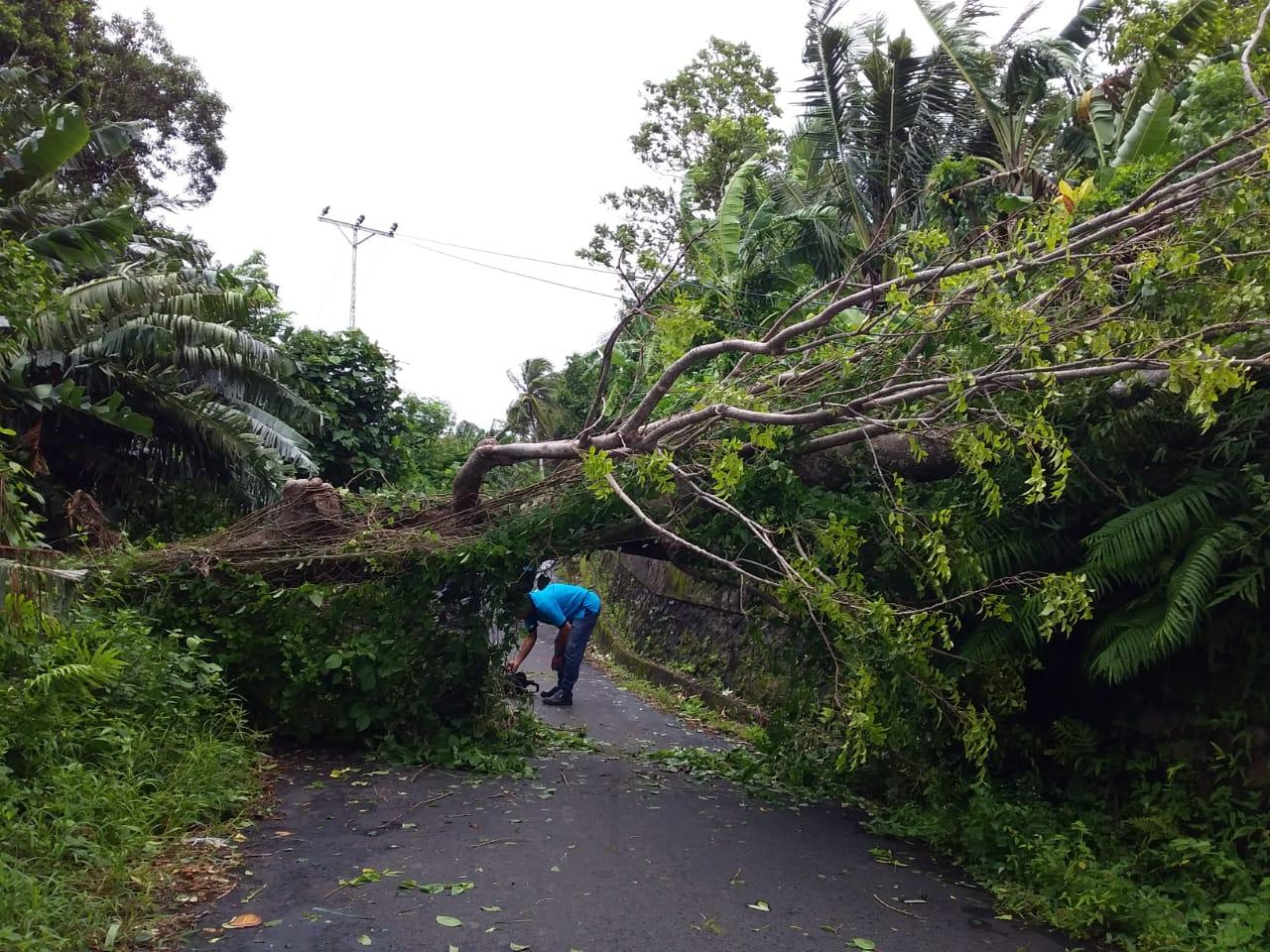 Angin Kencang Terjang Banda, Pohon Tumbang & Rumah Rusak