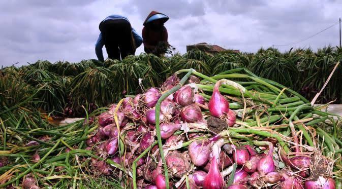 BI Bantu Gapoktan Kembangkan Bawang Merah di Maluku Tenggara