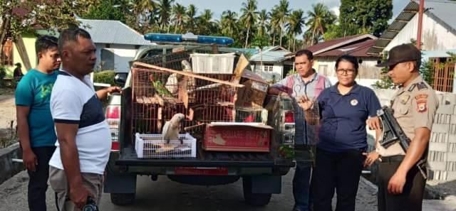 BKSDA Sita Puluhan Burung Endemik Maluku