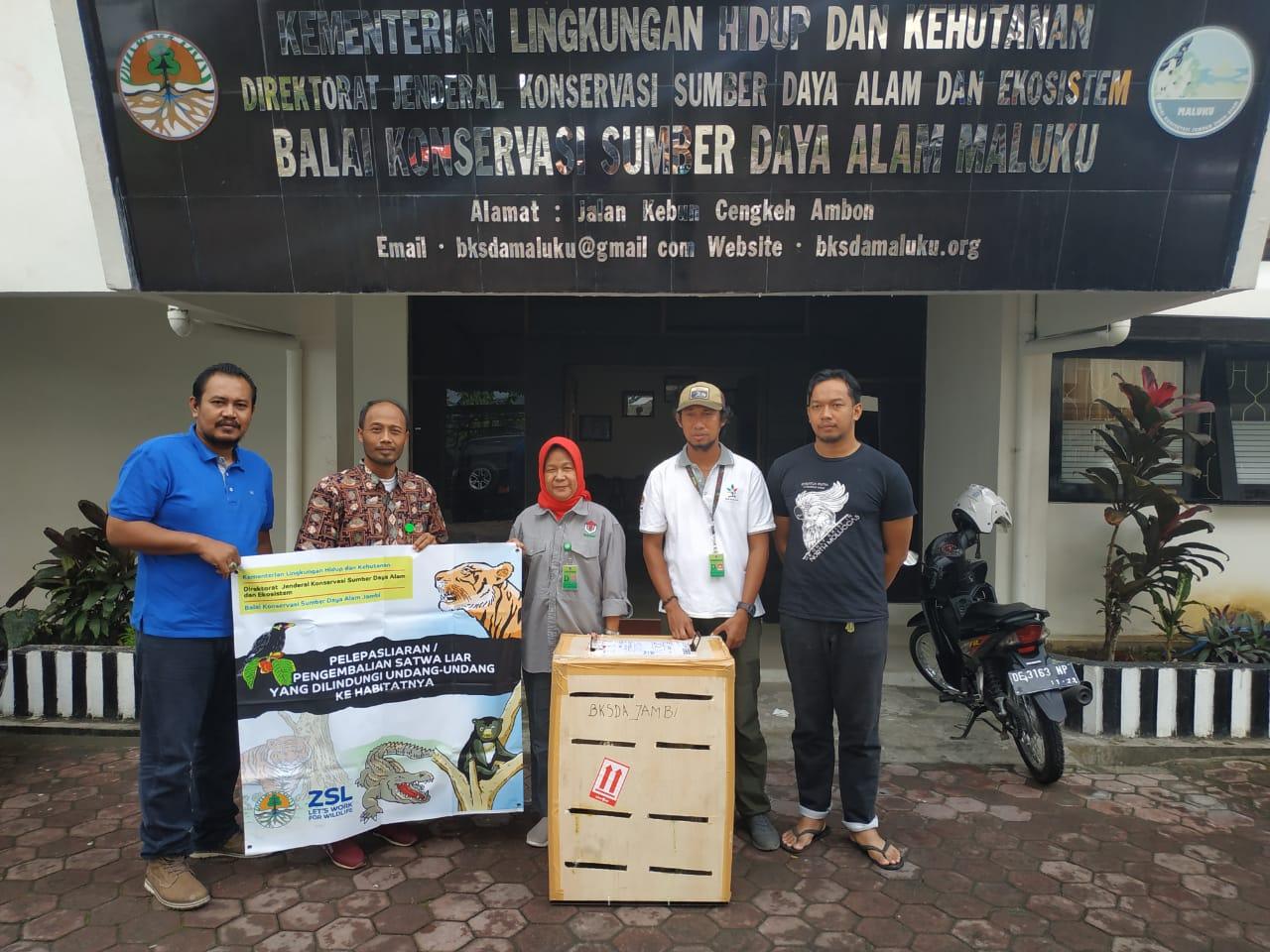 Disita di Jambi, 12 Kakatua Dilepasliarkan di Maluku dan Papua