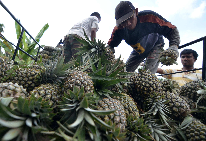 Ekspor Buah Nenas Meningkat, Indonesia Sasar Argentina