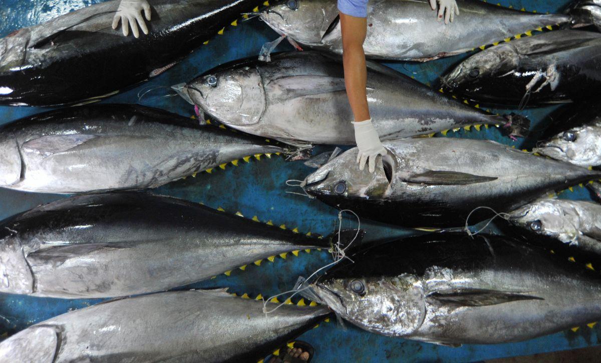 Mei 2019, BPS: Menurun, Ekspor Maluku Tetap Rambah Amerika Serikat