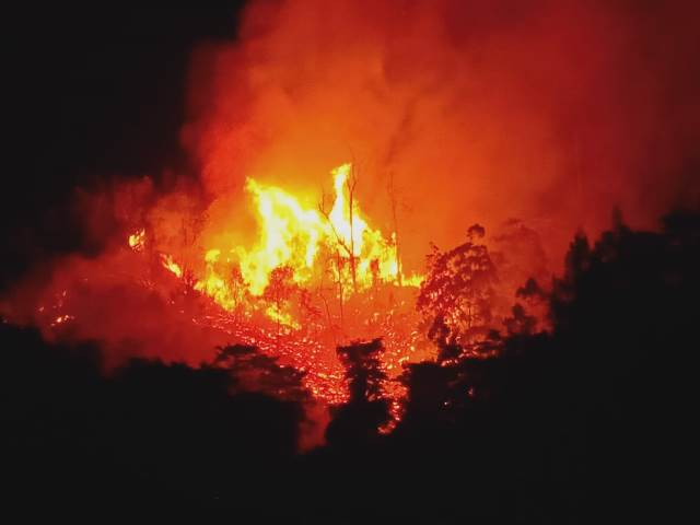 Api Membara 5 Jam, 20 Hektar Hutan di Kawasan Air Besar Batu Merah Terbakar