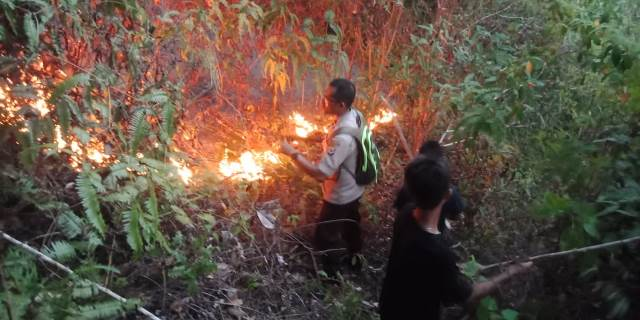 Hutan Seluas 6 Hektar di Leihitu Ludes Terbakar
