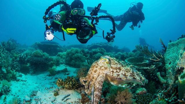 Fotografer Mancanegara Pastikan Ikut Amboina Underwater Photography Competition 2020