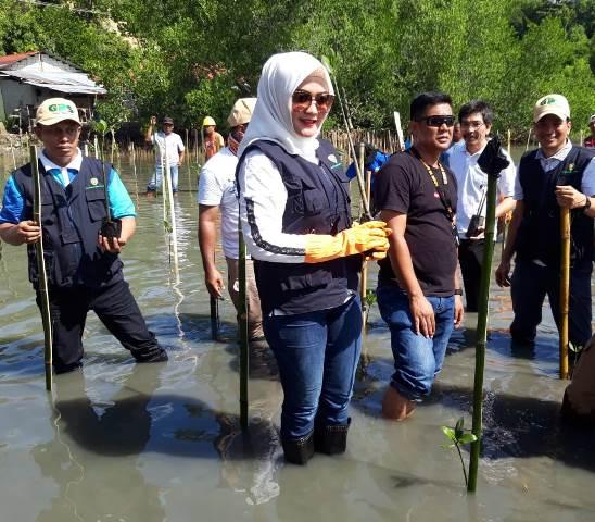 TP PKK Maluku & Dinas Lingkungan Hidup Tanam 500 Anakan Mangrove