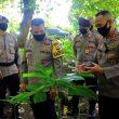 Kapolda Maluku Tinjau Kebun Percontohan Budidaya Porang