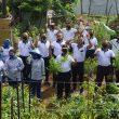Lantamal Ambon Panen Sayur Hasil Program Ketahanan Pangan