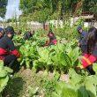 Brimob Panen Sayur Hasil Pemanfaatan Lahan Kosong Di Piru
