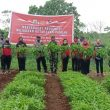 TNI-Polri Bantu Jaga Ketahanan Pangan Lewat Kampung Tangguh Di Ambon