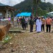 Kapolda Maluku Serahkan Sapi Kurban Di Namrole