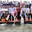 Tebar 10 Ribu Benih Ikan Di Teluk Ambon, Ini Harapan MKP