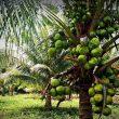 BPS: NTP Provinsi Maluku Juli 2020 Turun 0,18 Persen