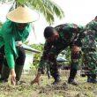 Manfaatkan Lahan Kosong, Prajurit Yonif 731/Kabaresi Ajak Masyarakat Budidaya Jagung