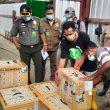 45 Ekor Satwa Endemik Maluku Ditranslokasi Dari Jawa Timur