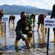 Personel Lantamal Ambon & Wartawan Tanam 50 Anakan Mangrove