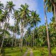 Daya Beli Petani & Nelayan Meningkat, Ini Penjelasan BPS Maluku