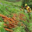 Daya Beli Petani & Nelayan di Maluku Meningkat, Ini Penjelasan BPS